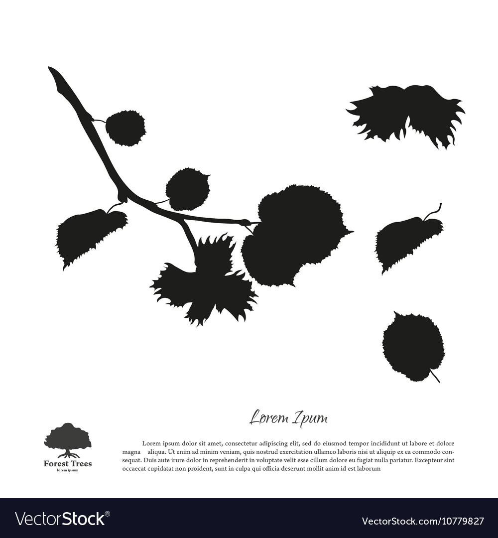 Black silhouette of branches of hazelnuts