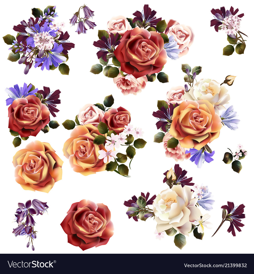 Beautiful collection rose flowers vector