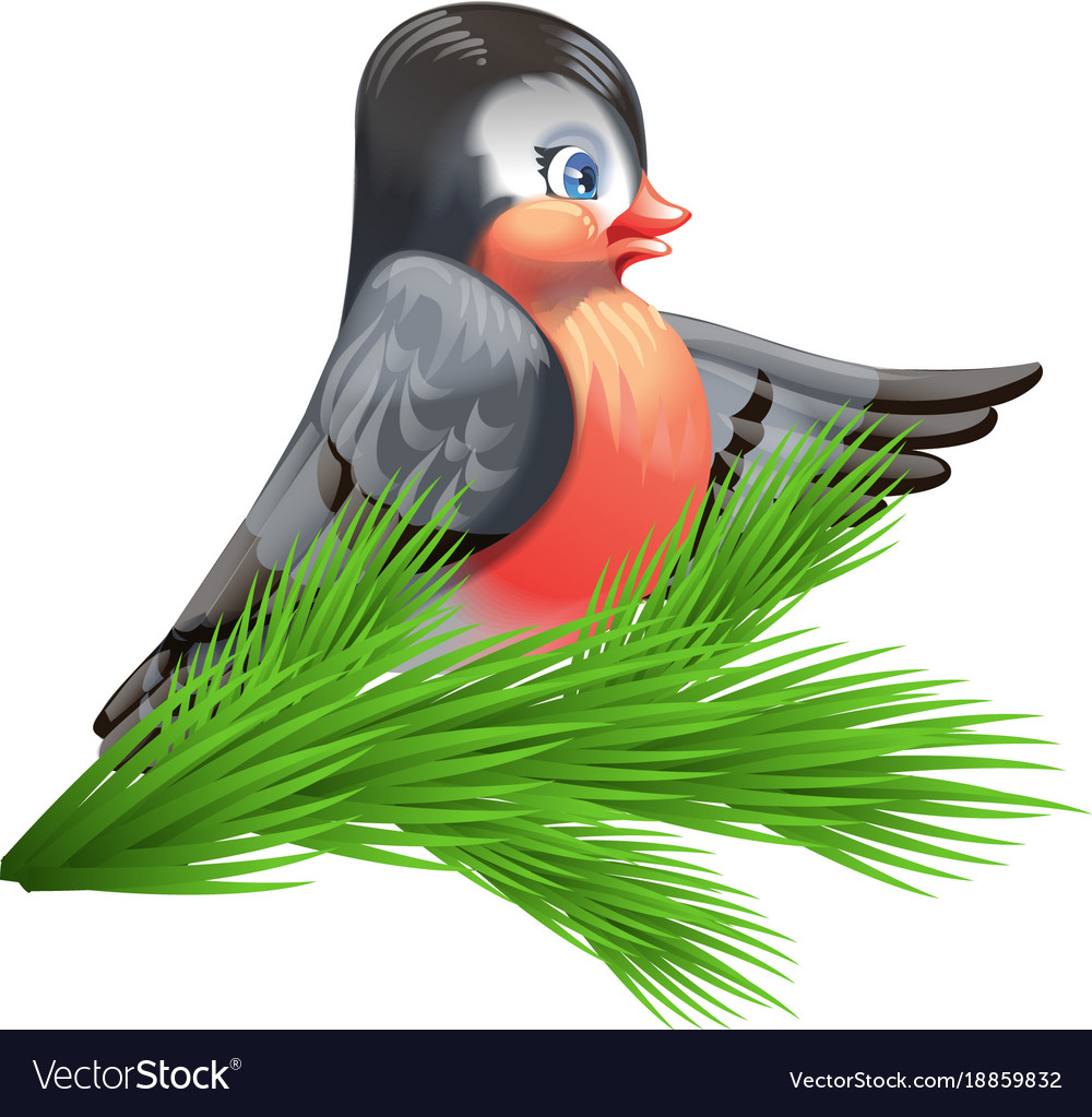 Image of a bullfinch on a spruce branch