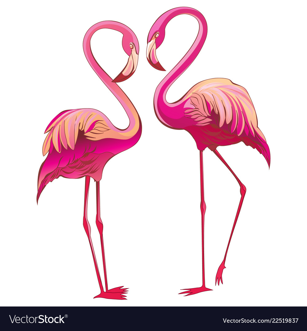 Two colorful flamingos looking at each other and