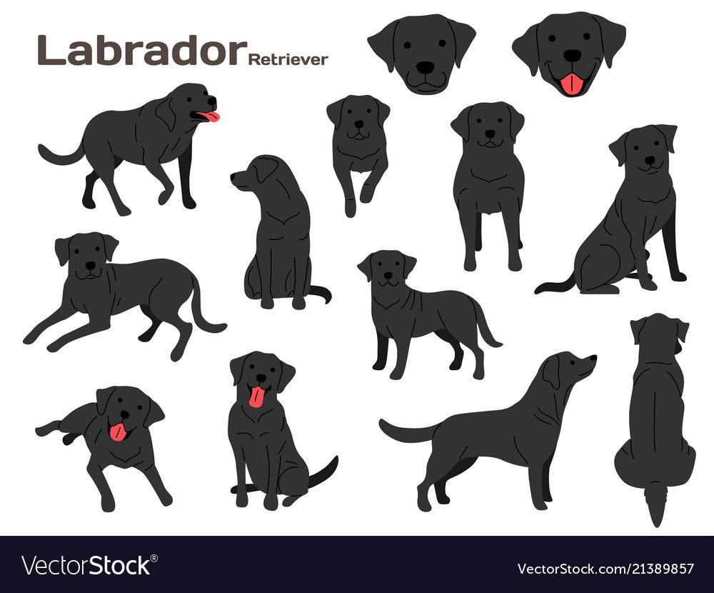 Labrador in action