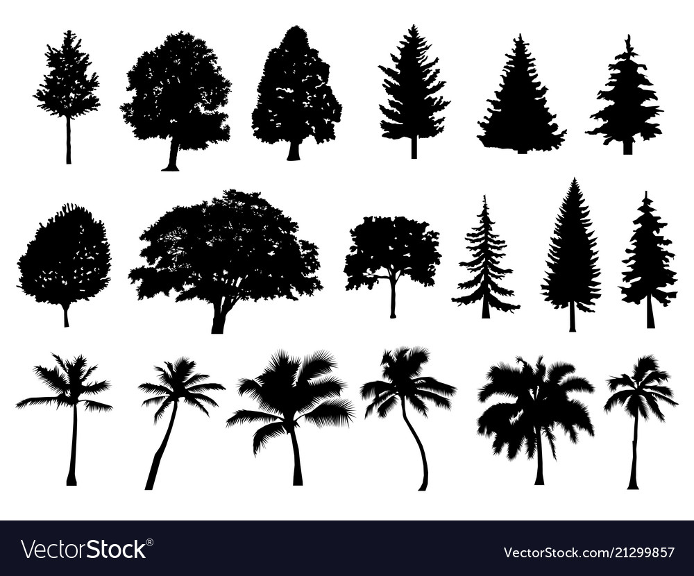Trees set silhouette coniferous forest isolated