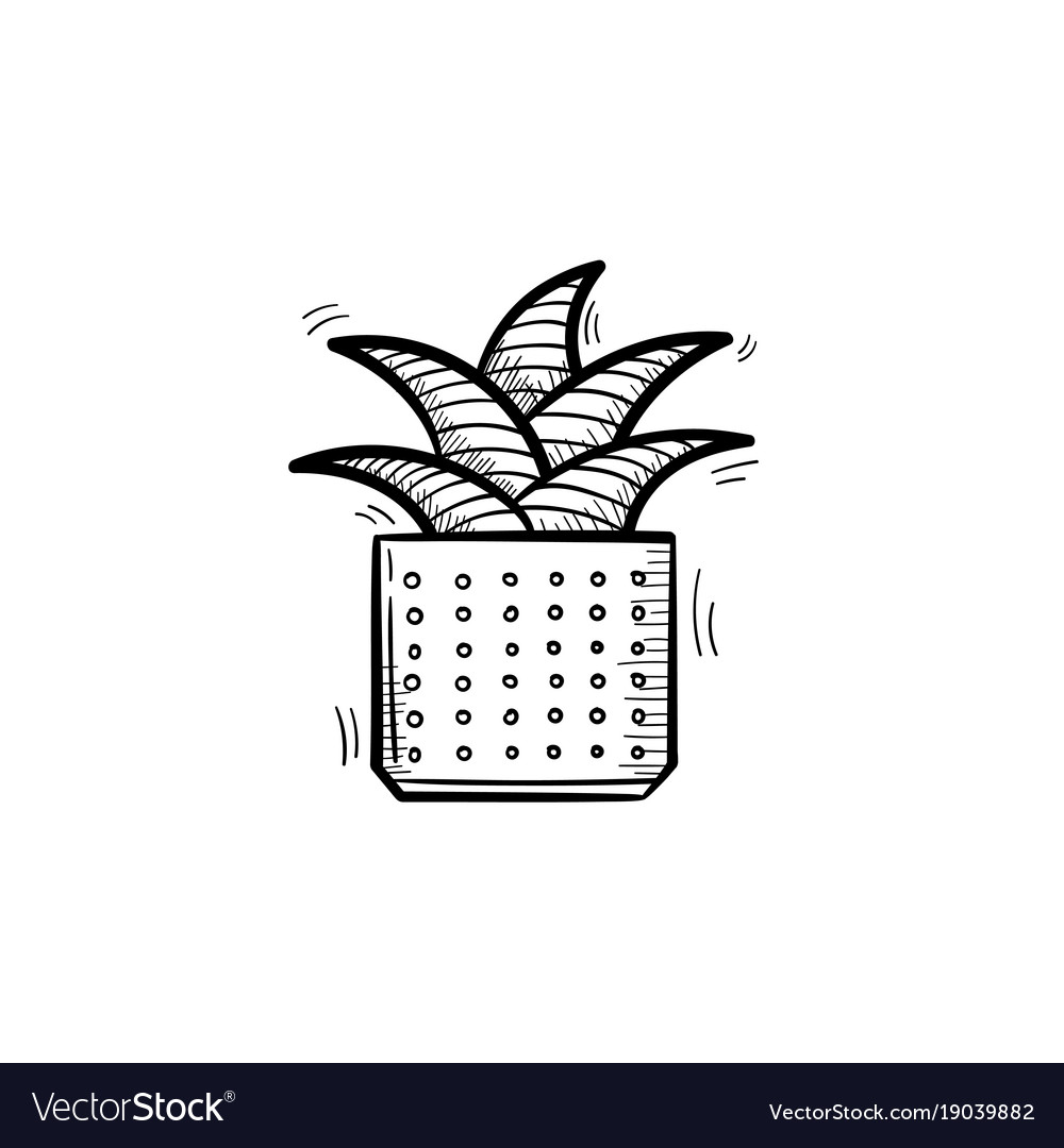 Mother-in-law tongue plant hand drawn sketch icon vector image