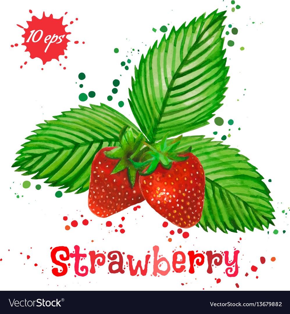 Watercolor strawberry isolated on white background