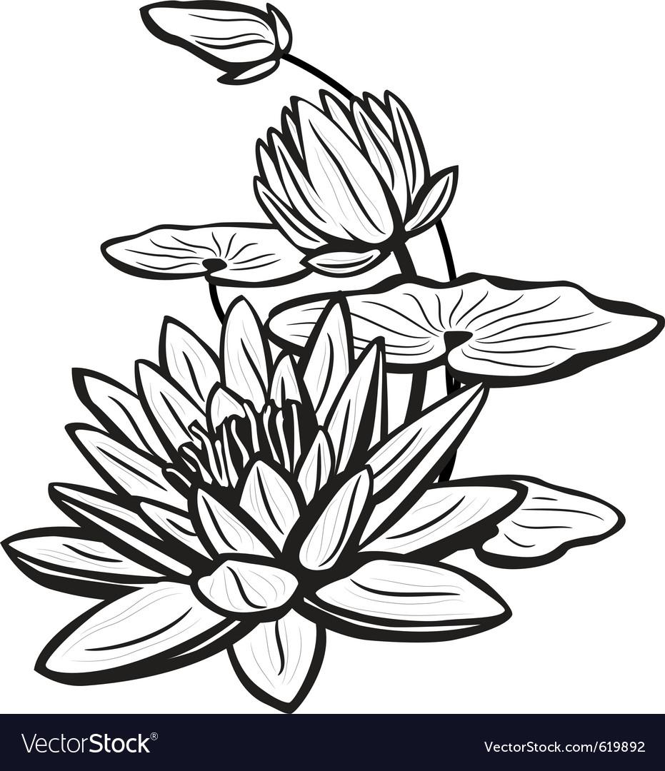 Sketch of lotus flowers vector