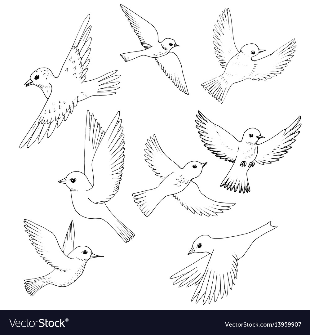 Set of flying birds