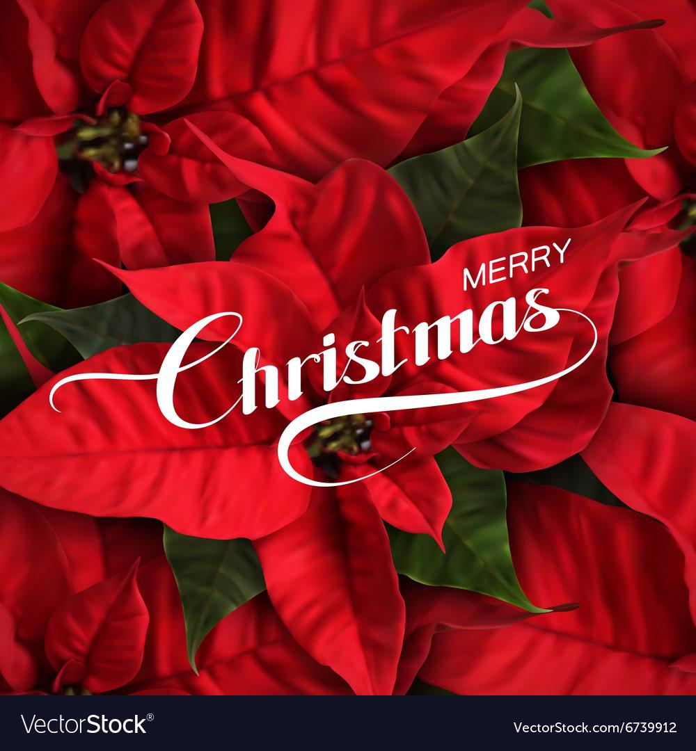 Merry Christmas Holiday