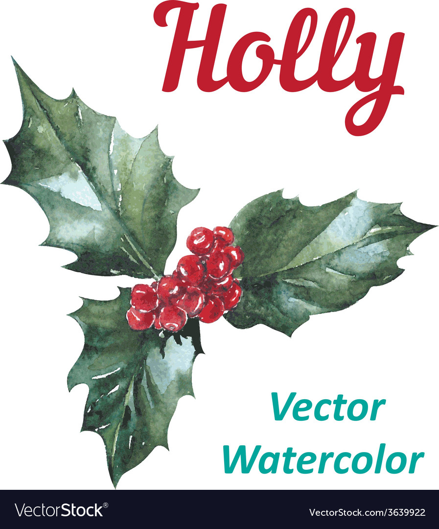 Holly berry icon Christmas symbol