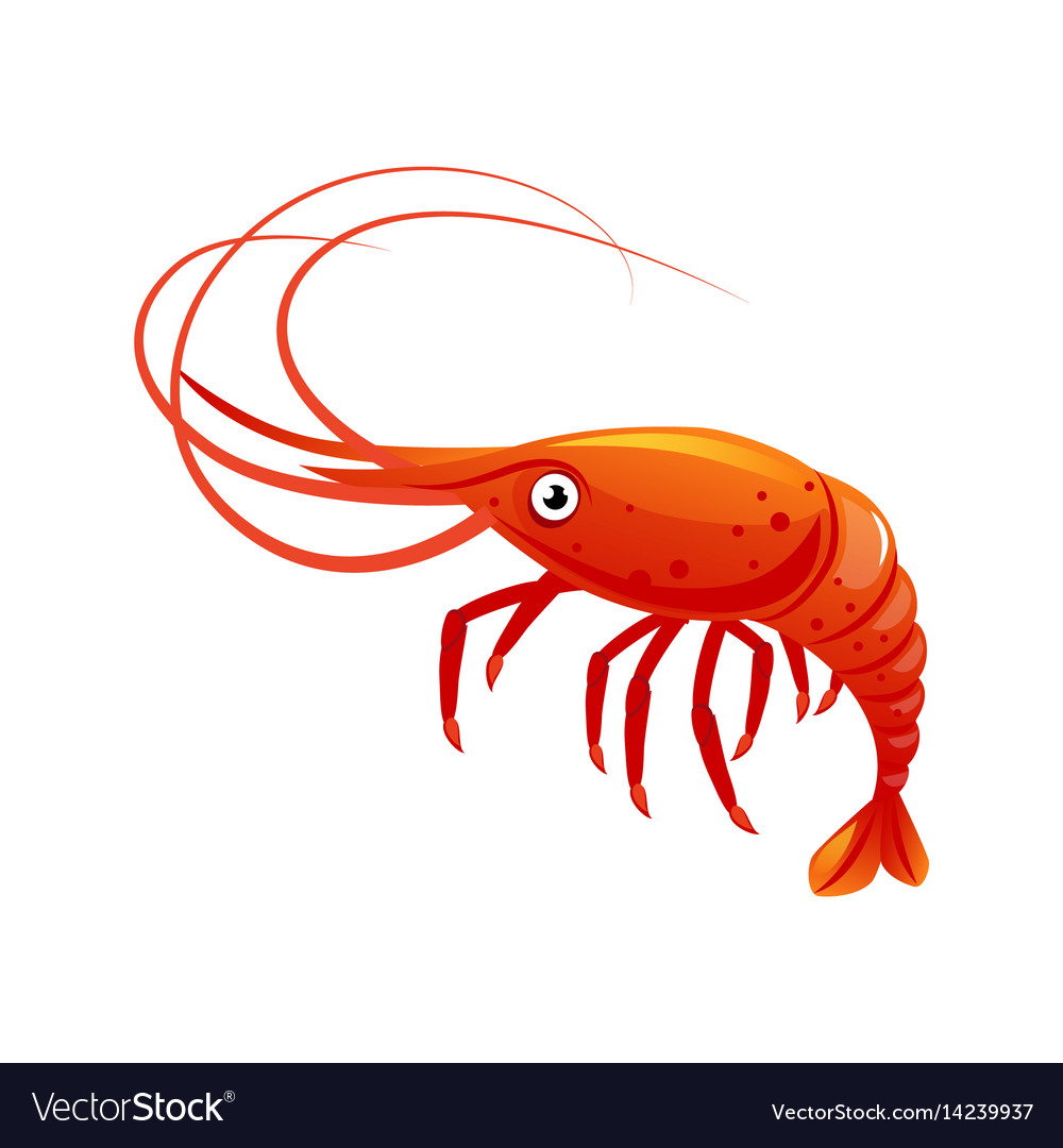 Shrimp sea creature and seafood colorful cartoon vector image