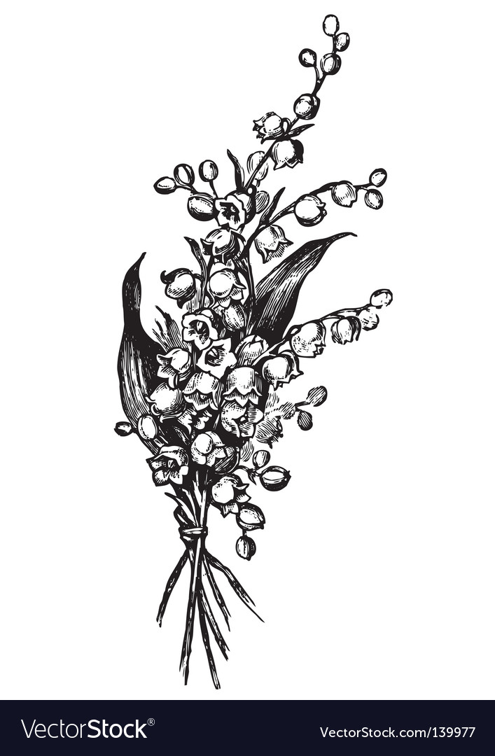 Antique lily vector image