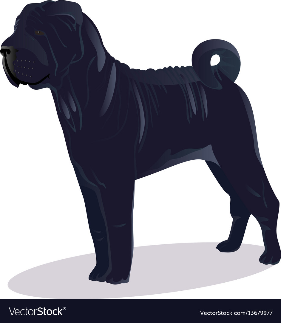 Chinese shar pei blue dog