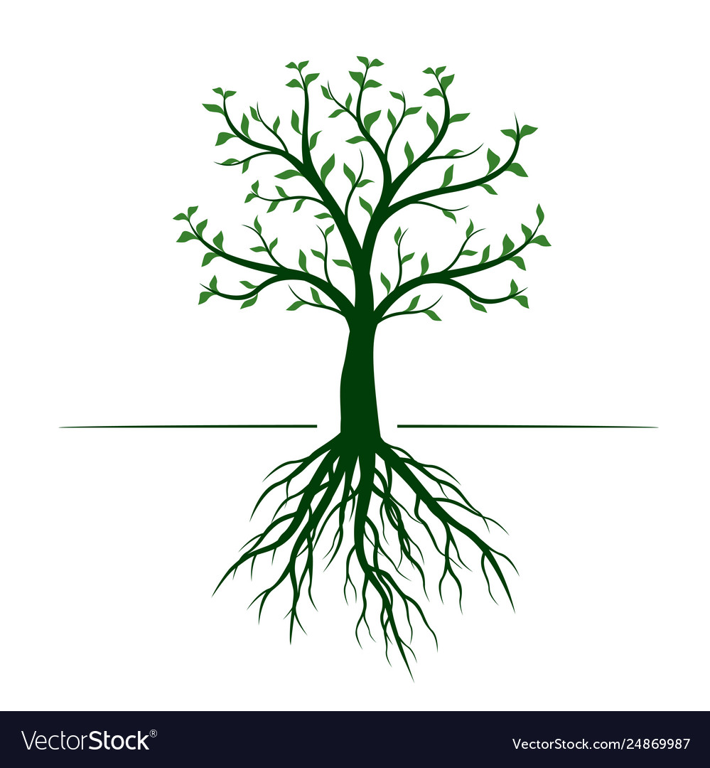 Green tree with leaves and roots on white
