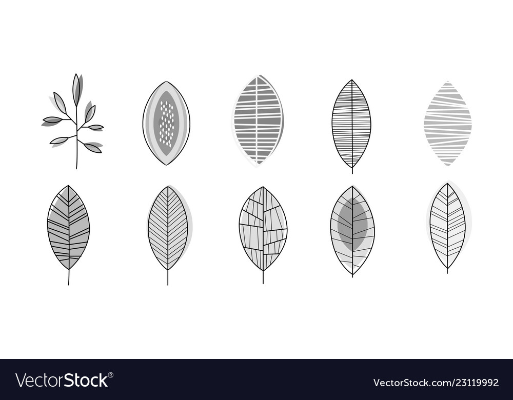 Set of monochrome leaves in linear style