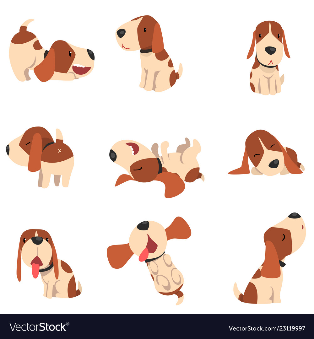 Cute beagle dog in various poses set funny animal