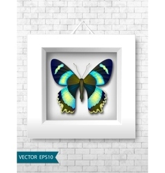 butterfly in a white frame on a brick wall vector image
