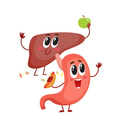 Cute and funny smiling human stomach and liver vector