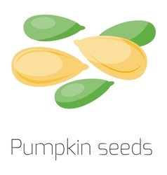Pumpkin seeds on white background vector
