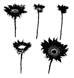 sunflower silhouettes series vector image vector image