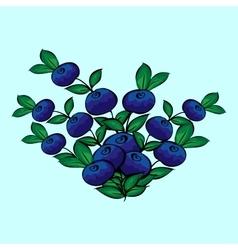 Blue berry Bush blueberries vector