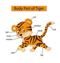 Diagram showing body part tiger vector