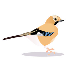 jay bird vector image