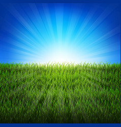 nature sunburst background with green grass vector image