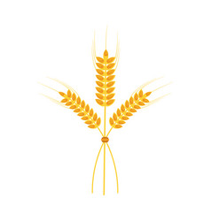 wheat ears icon image vector image