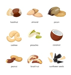 Cartoon nuts set vector image