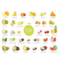 Delicious exotic fruits full of vitamins big set vector