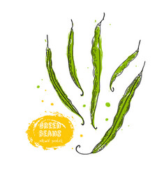 green beans hand drawn in the style vector image