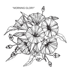 Morning glory flower and leaf hand drawn vector
