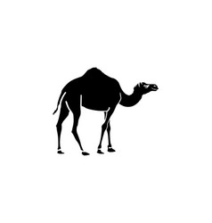 camel icon black on white background vector image