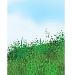 Grassland vector image