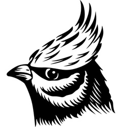 Head of a Bird vector image