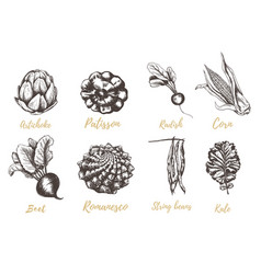vegetable collection hand drawing vector image