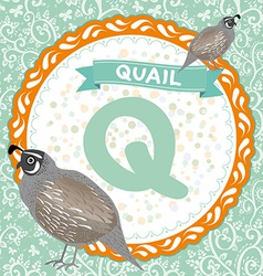 ABC animals Q is quail Childrens english alphabet vector image