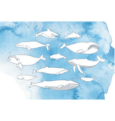 Different whale set hand drawn doodle vector