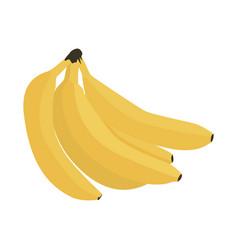 Fresh bunch bananas realistic vector