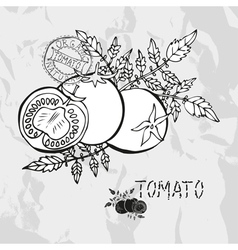 Hand drawn whole and sliced tomatoes vector image