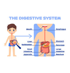 Kid and digestive system with description poster vector