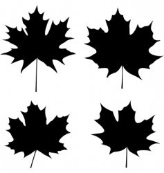 maple leaves silhouette vector image