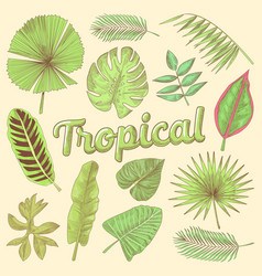 Tropical leaves hand drawn doodle with palms vector