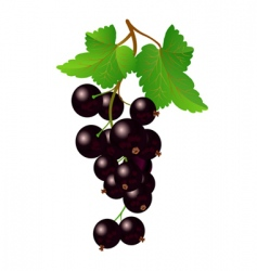 Currant black on bench vector