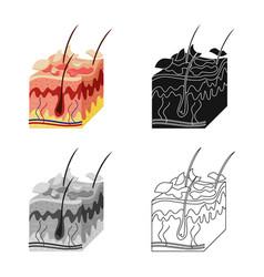 Design skin and epidermis icon vector
