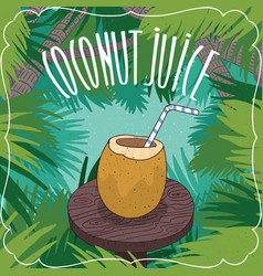fresh coconut juice in coconut fruit or nut vector image