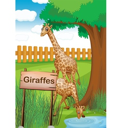 Giraffes inside the wooden fence vector