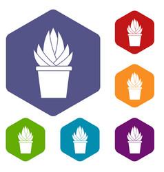Aloe vera plant icons set hexagon vector