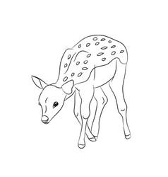 baby deer lines vector image