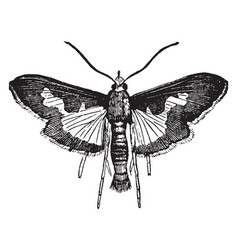 Pickle moth vintage vector