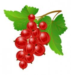 red gooseberries vector image vector image